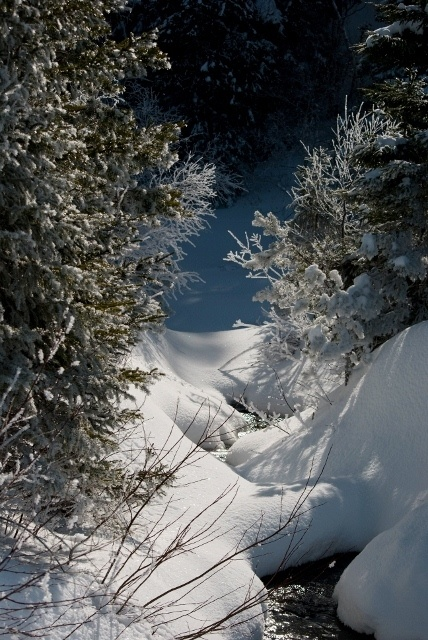 Read more about the article So what's really better – cross-country skiing or downhill skiing?
