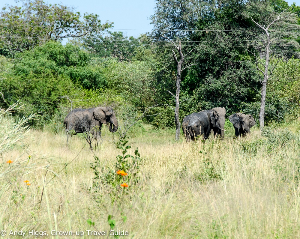 Elephants Vic Falls Rainforest Park