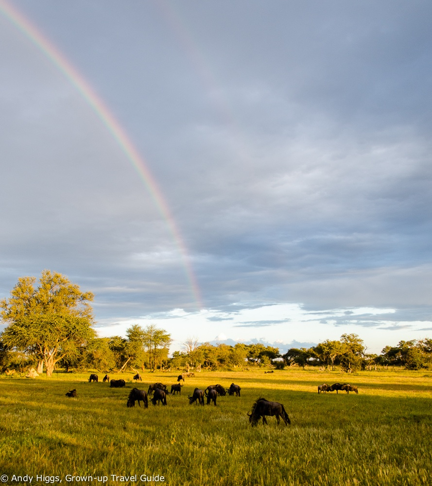 Wildebeest and rainbow