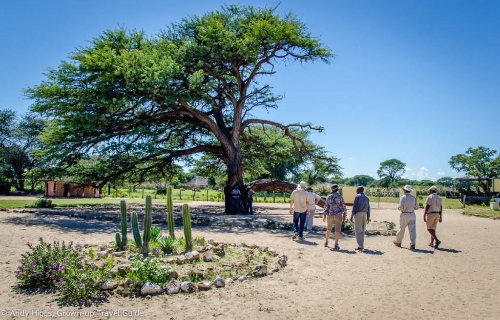 Ngamo Tree