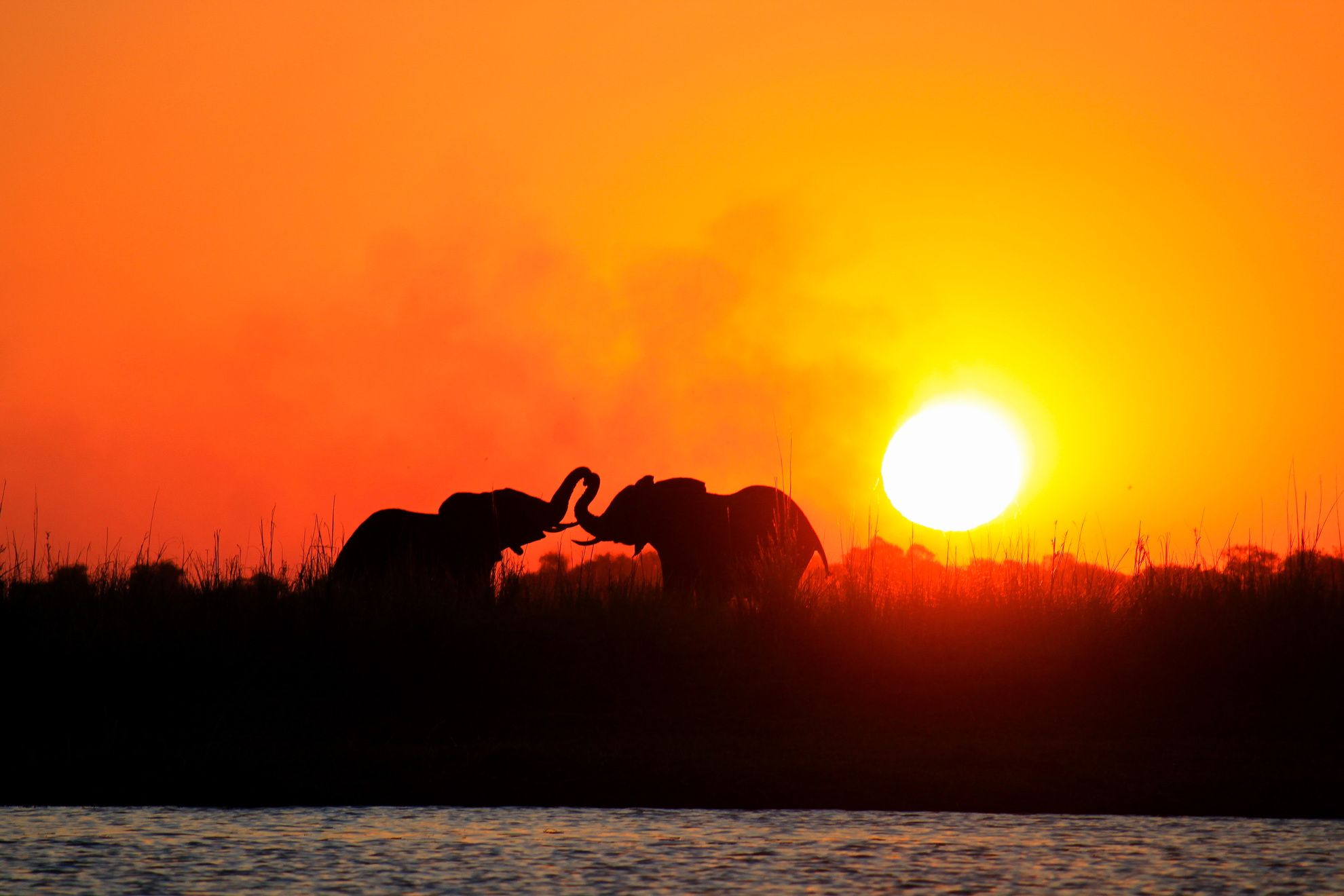 Read more about the article Our next big adventure: Botswana and South Africa