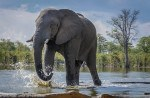 Read more about the article Grown-up Travel Guide's Best Photos: Elephant, Hyena Pan, Botswana
