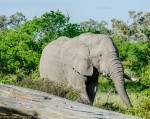 Read more about the article An unforgettable Botswana safari: Part 2 – Moremi Game Reserve