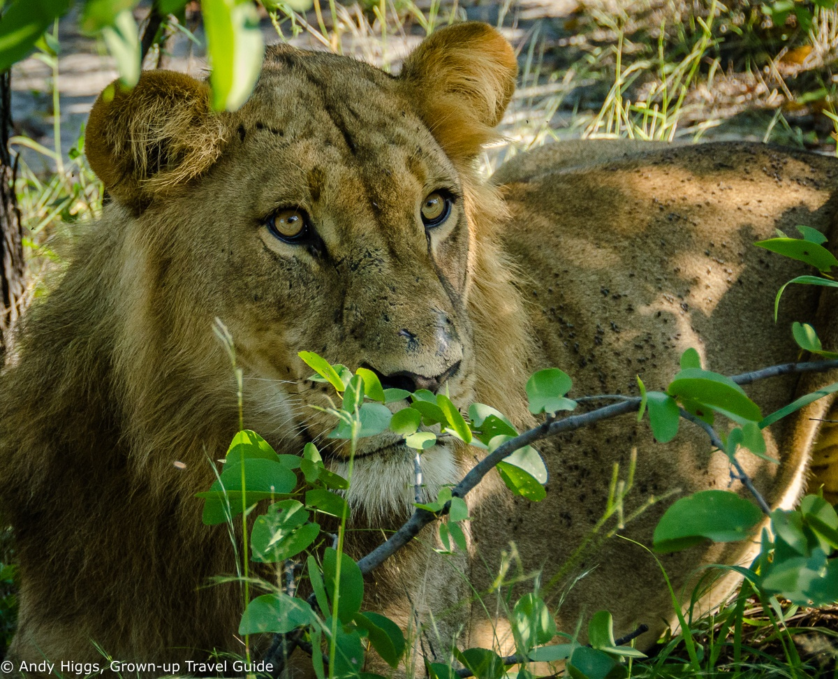 Read more about the article An unforgettable Botswana safari: Part 3 – Hyena Pan