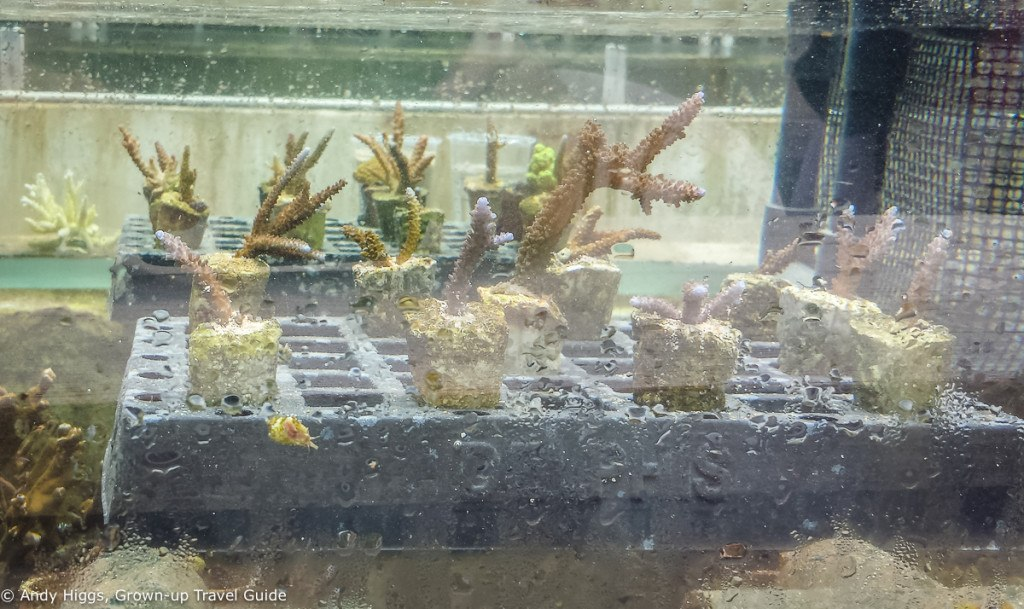 Coral planting final product