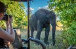 Read more about the article Preparing For Safari: What To Pack