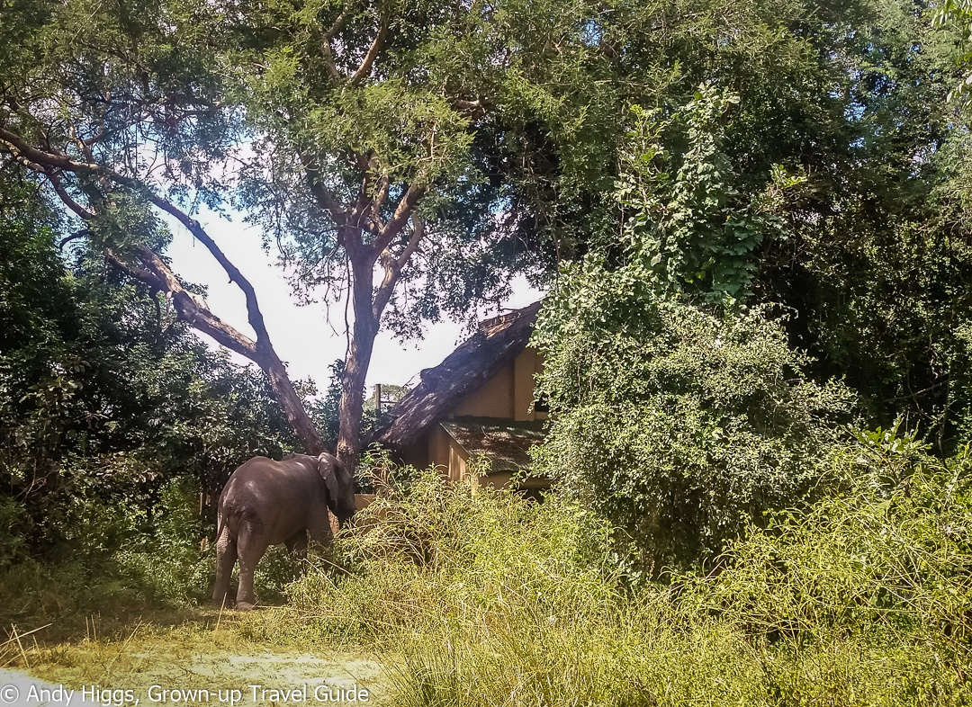 Read more about the article A flying visit to Flatdogs Camp in Zambia