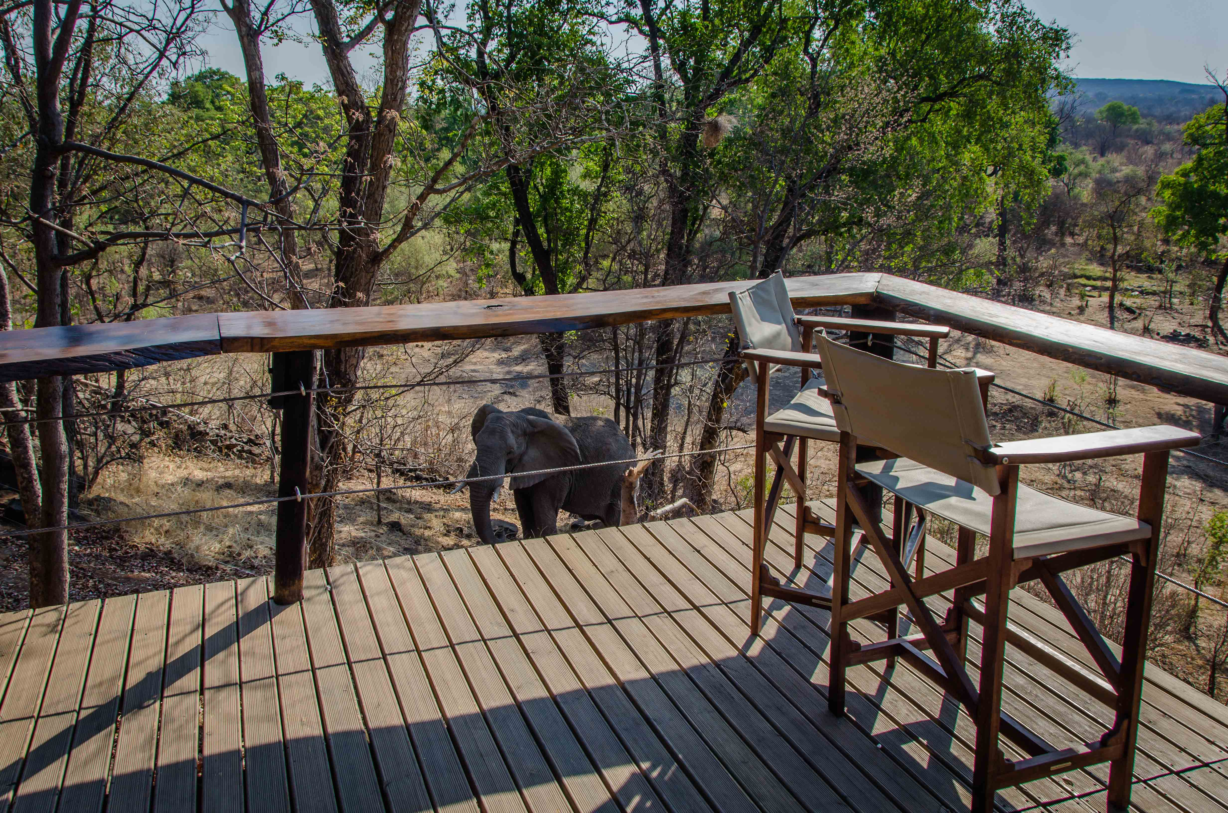 Read more about the article Accommodation Review: Masuwe Lodge, Victoria Falls, Zimbabwe