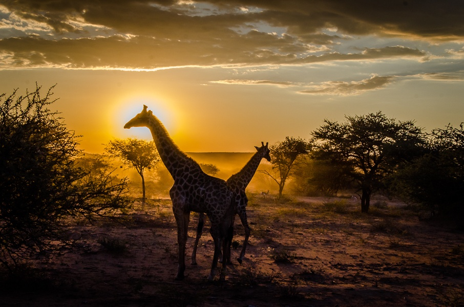 Read more about the article Trip report: Namibia – Driving north to Etosha National Park